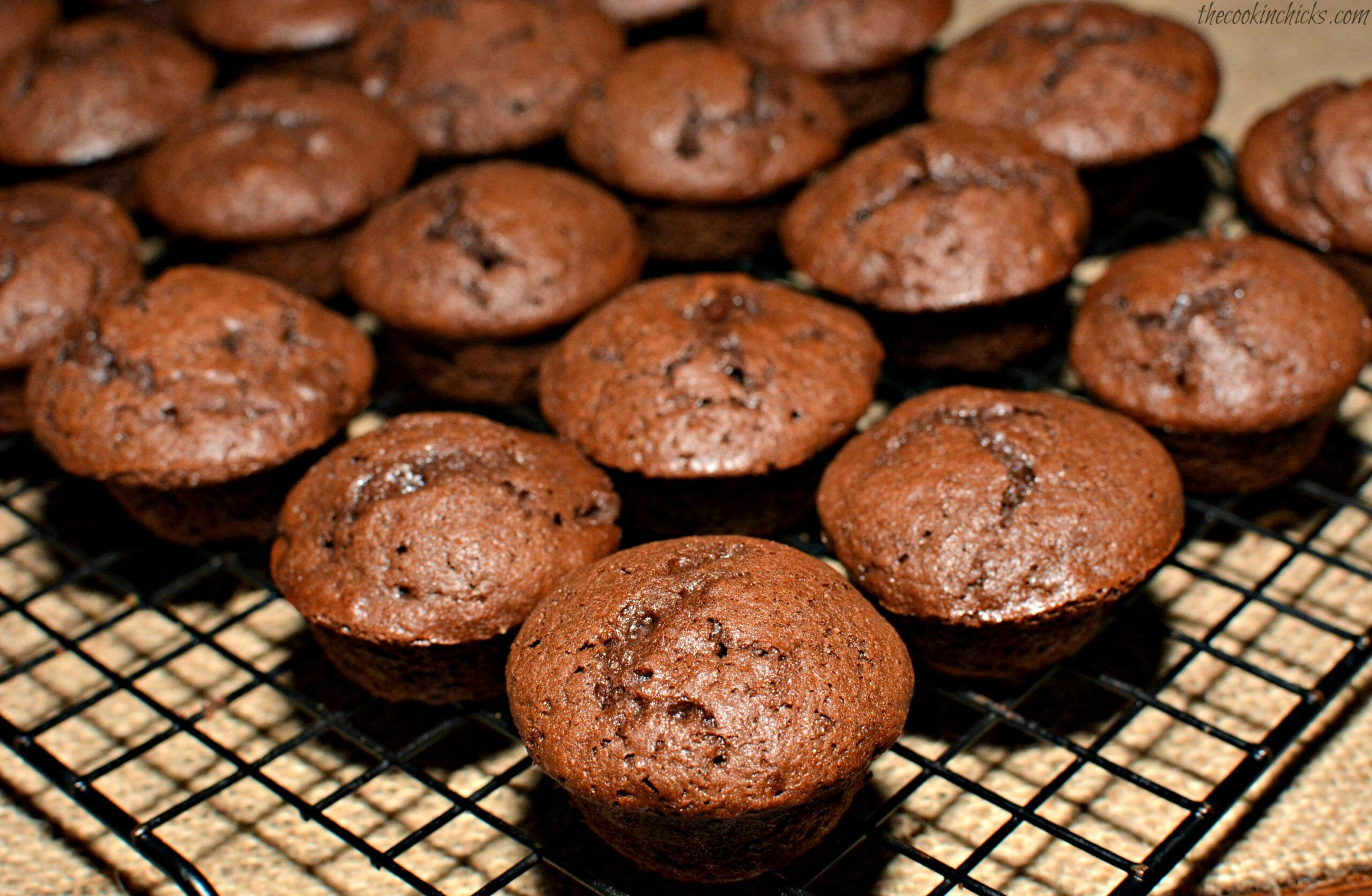 Copycat Costco Chocolate Muffins | The Cookin Chicks